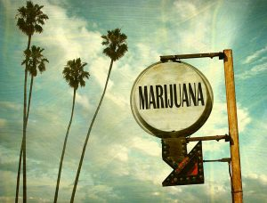 Marijuana Possession Defense Attorneys